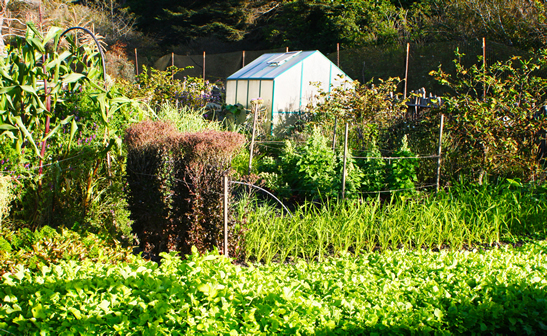 Victory Gardens for Peace in Mendocino, CA