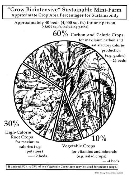 The 60-30-10 crop ratio used in the GROW BIOINTENSIVE Method